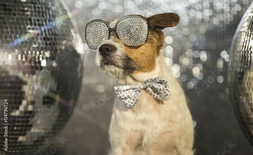 Papiers peints Magasin de musique dog disco