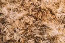 Light Brown Curly Hair Fur Tex...