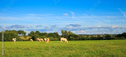 Poster de jardin Vache Vaches au pré > France