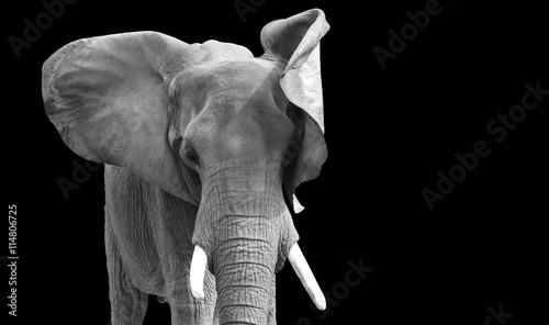 Foto op Aluminium Olifant Elephant isolated with black background