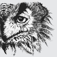 Monochrome Black And White Owl...