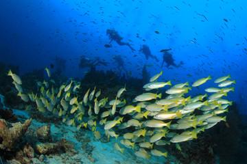 Fototapeta na wymiar Scuba divers exploring coral reef