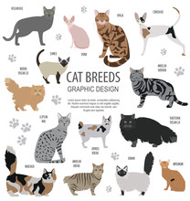 Cat Characters And Vet Care Icon Set Flat Style