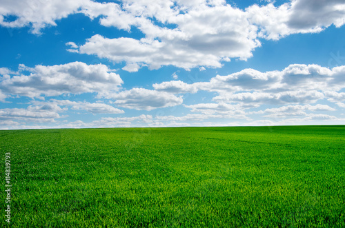 In de dag Groene Image of green grass field and bright blue sky