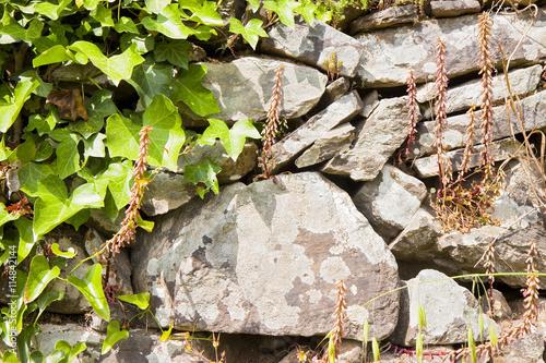Foto op Aluminium Op straat Old italian stone drywall