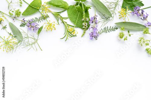 Fototapeta variety of fresh herbs on white background obraz