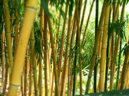 Poster Bamboe Bambus-Wallpaper