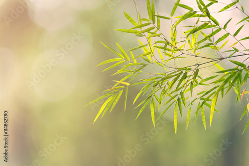 green bamboo leaves on green bokeh nature for background.