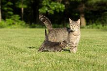 Cute Tabby And Kitten