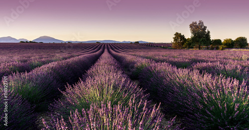Canvas Prints Lavender champ de lavande