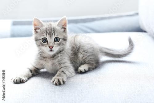 Obraz na płótnie Piękny mały kot na szarej kanapie