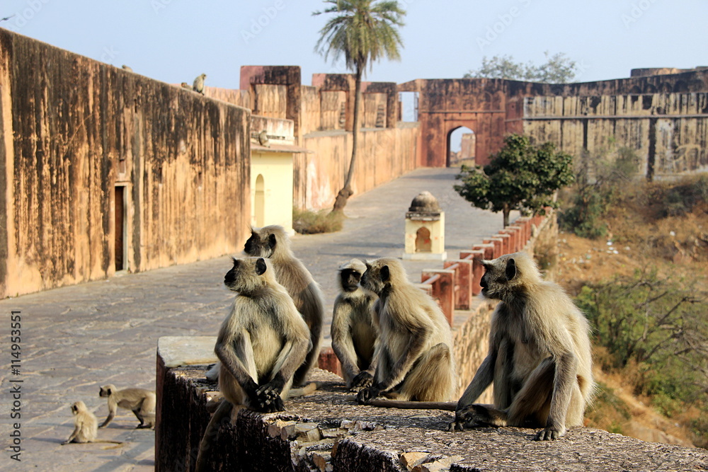 Plakat Monkeys Galore at Monument