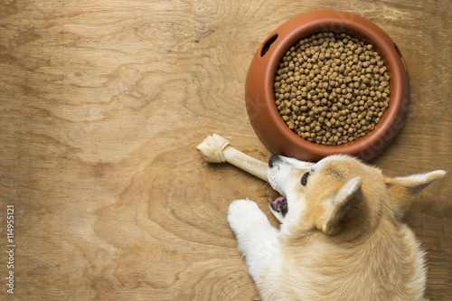 Photo A corgi dog biting a dog bone besides a bowl of kibble food