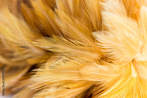 yellow chick  feather