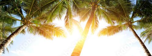 Foto auf Gartenposter Palms Palm
