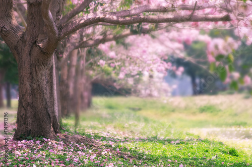 Poster Rose clair / pale Pink trumpet tree.