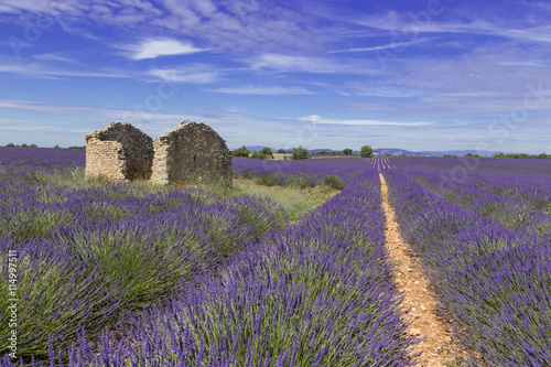 Fotobehang Lavendel Champ de Lavande Provence France