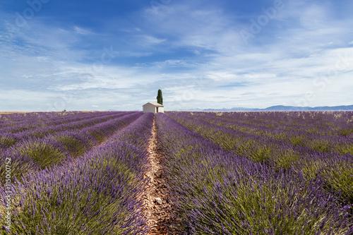 Schilderijen op glas Landschap Champ de Lavande Provence France