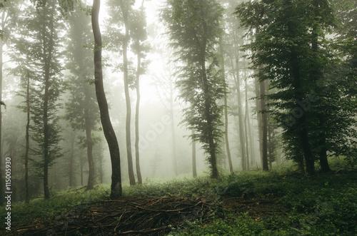 Keuken foto achterwand Olijf green summer forest