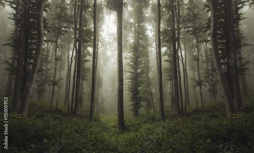 Fototapeten Wald green woods in summer