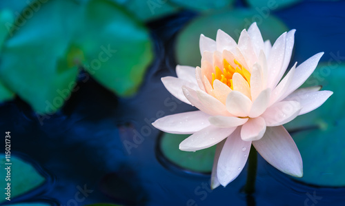 Canvas Prints Lotus flower Lotus Flower