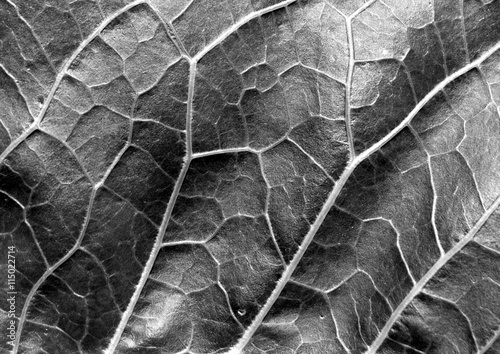 Fényképezés  Abstract black and white leaf texture.