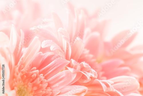 Keuken foto achterwand Gerbera Gerbera flower on soft and blurred pastel tone style for backgro
