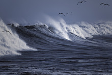 Seagulls Surfing The Wave