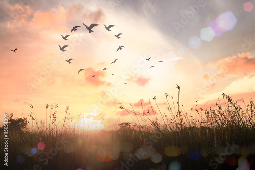 World environment day concept: Bird flying in heart shape over meadow autumn sunrise background