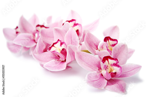 Naklejka na szybę pink orchid flowers isolated on white