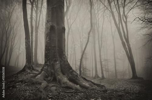Naklejka na szafę Stare drzewo w upiornym lesie