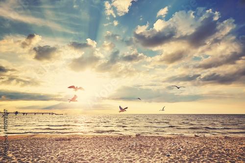 Obraz Retro stonowana plaża przy zmierzchem z latającymi ptakami - fototapety do salonu