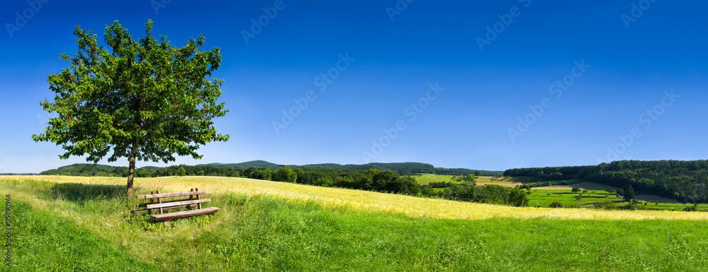 Zielony krajobraz w lecie jako tło <span>plik: #115090966 | autor: eyetronic</span>