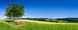 Fototapeta Natura - Grüne Landschaft im Sommer als Hintergrund