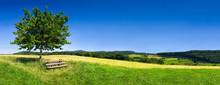 Grüne Landschaft Im Sommer Als Hintergrund
