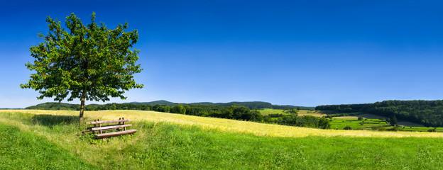Zielony krajobraz w lecie jako tło