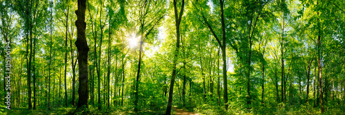 Lasowa panorama z promieniami słońca