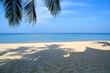 coconut palm shadow on tropical beach in Thailand
