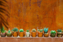 Green Plastic Cactus With Red Wall