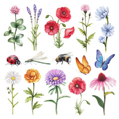 Watercolor illustrations of wild flowers and insect illustration