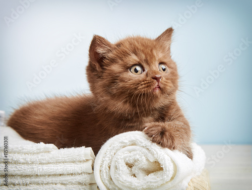 obraz lub plakat kitten and towels
