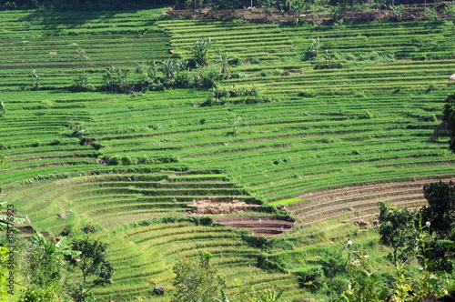 Foto op Plexiglas Indonesië rizière en terrasse, indonésie, java