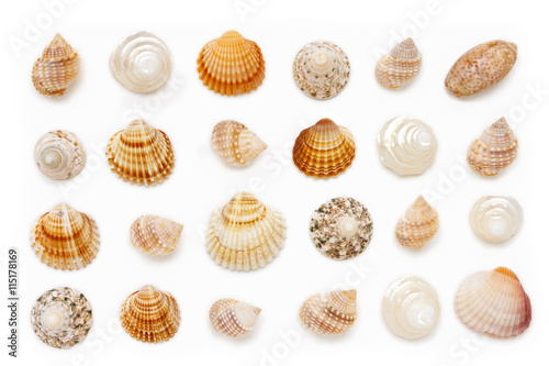 Fotografie, Obraz  composition of exotic sea shells on a white background.