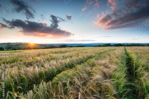 Foto auf Gartenposter Landschappen Beautiful Sunset over Farmland