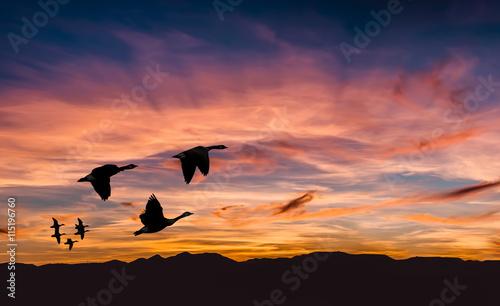 Poster Corail Beautiful landscape on sunset or sunrise with flying birds natur