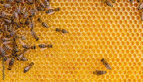 Foto op Canvas Bee Close up view of the working bees on honey cells