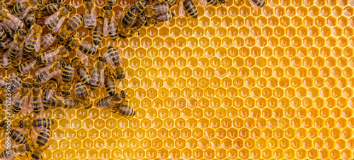 Canvas Print Close up view of the working bees on honey cells