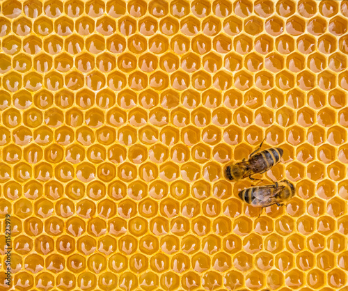 Poster Bee Close up view of the working bees on honey cells