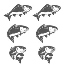Set Of Vintage Carp Fish In Various Swimming Positions. Opened And Closed Mouth. Single Color, Negative Space Illustration