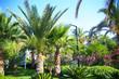 Magnificent tranquil tropical landscape